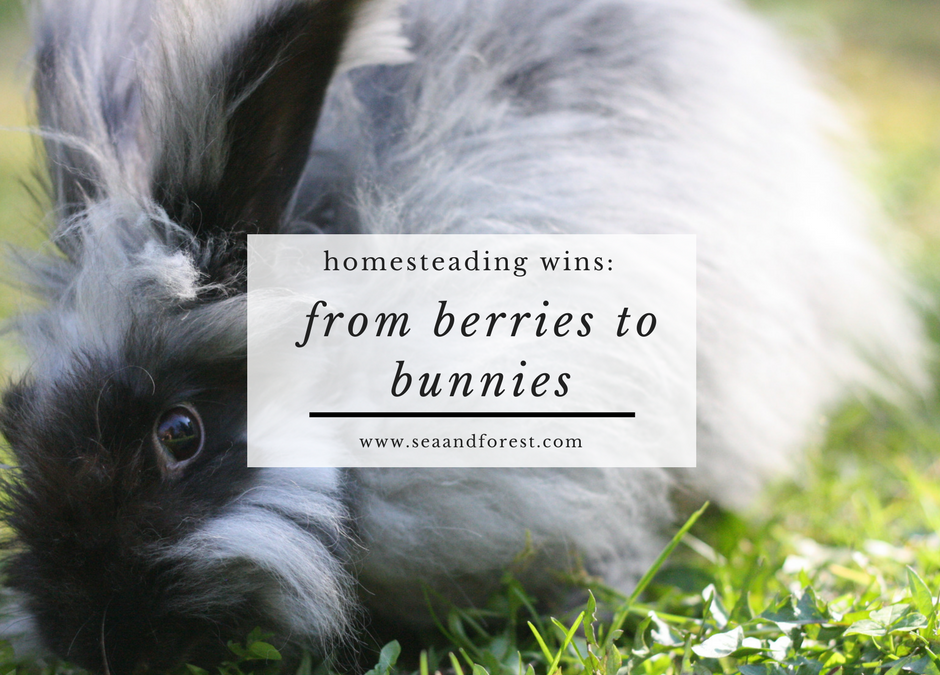 Homesteading Wins: From Berries to Bunnies