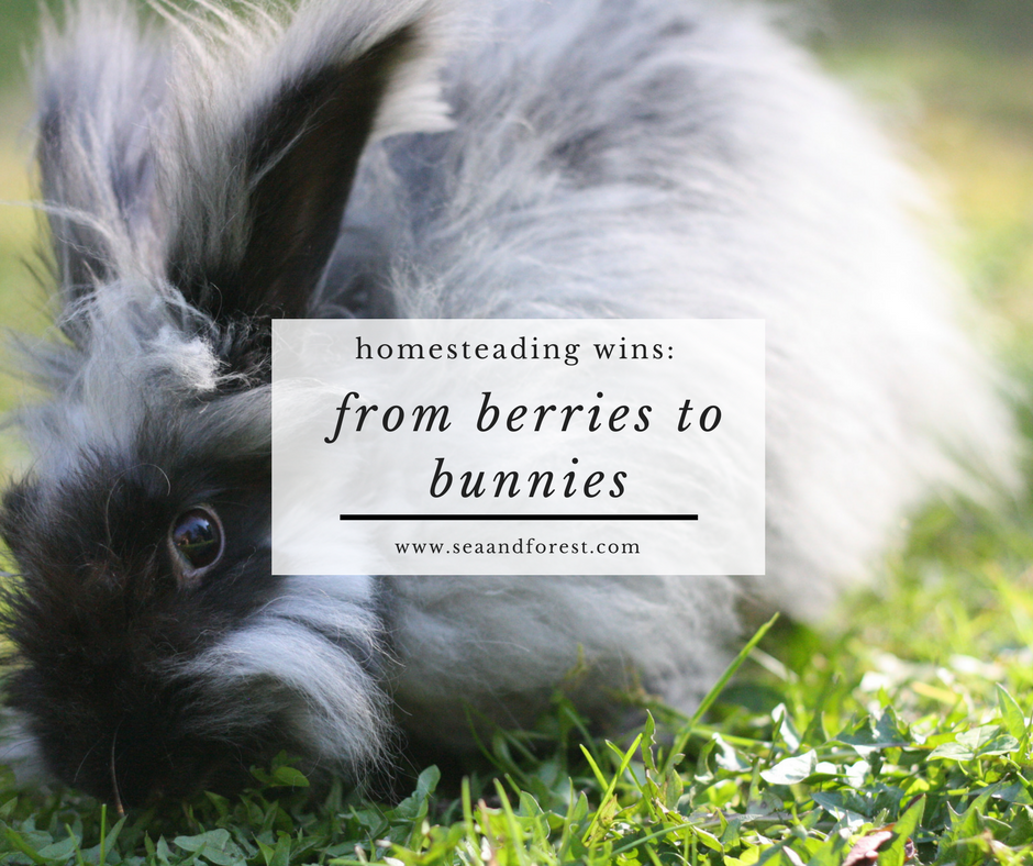 From Berries to Bunnies